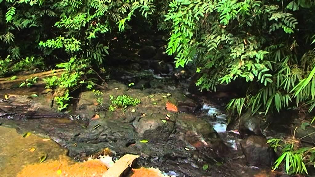 vipassana-meditation-centre-dhamma-kuta-sri-lanka-8