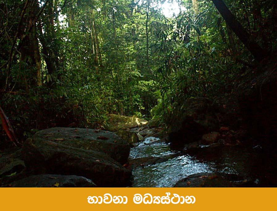 vipassana-meditation-centre-dhamma-kuta-sri-lanka-9