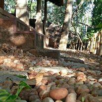 sarovaram-ayurveda-backwater-health-center-kerala-10