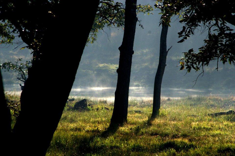 athreya-ayurvedic-resort-kerala-12